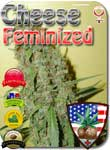 cheese-feminized