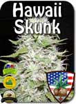 hawaiian-skunk