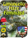 lemon-haze-fem