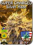 silver-haze-high-cbd-seeds