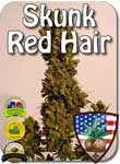 skunk-red-hair