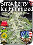 strawberry-ice-fem